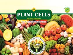 RICH PLANT CELLS 28 PACK